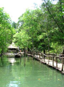 Hutan Payau (Mangrove)