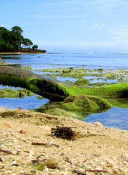 Pantai Nasional Alas Purwo