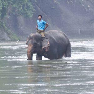 Gajah dan Sang Pawang