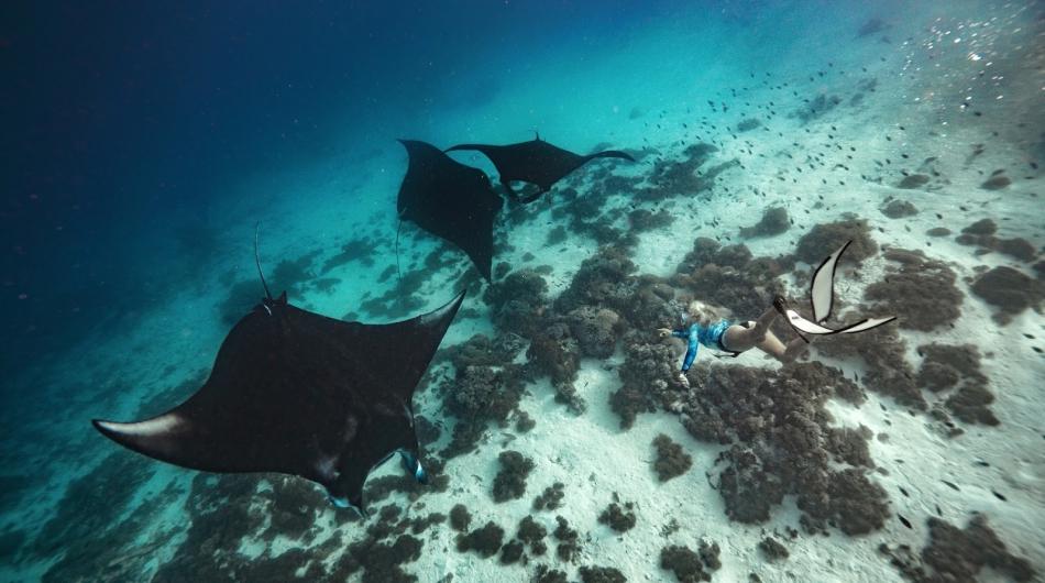 Snorkeling @Manta Point